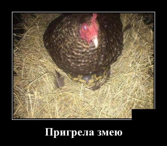Демотиваторы №2083 юмор, приколы,, Юмор