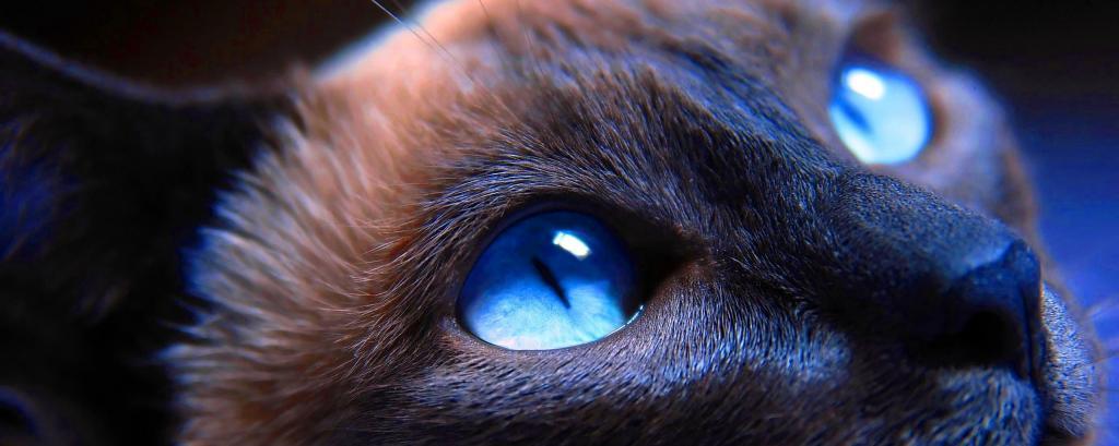 Можно ли капать «Альбуцид» кошкам в глаза и какие из-за этого могут быть последствия зверушки,живность,питомцы, Животные