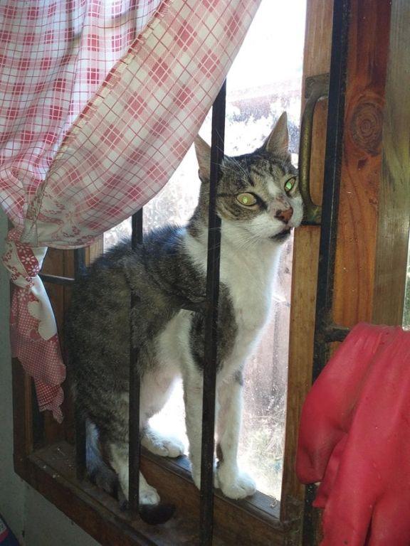 17 случаев, когда у котиков слетели настройки, и они начали вести себя странновато зверушки,живность,питомцы, Животные