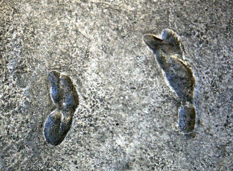 Следы в Танзании, оставленные более 3 млн лет тому назад путеествия, Путешествие и отдых
