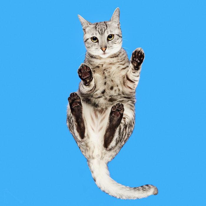 Фотографии Andrius Burba: кошки, вид снизу