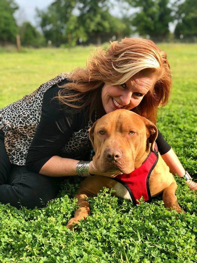 Брошенный пес плакал от боли и отчаяния истории из жизни