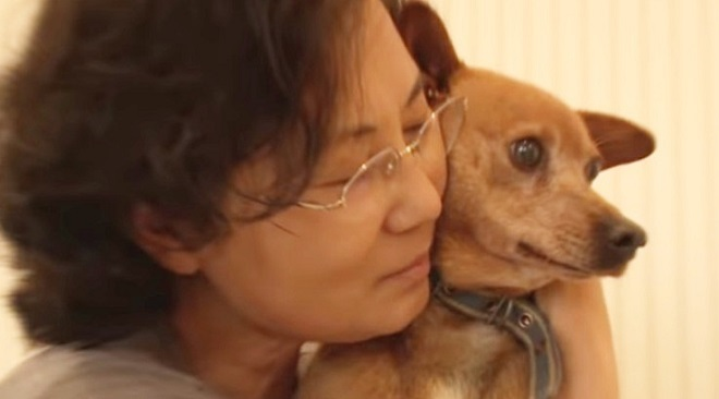 Пережив трагедию, пес на цепи перестал доверять даже хозяйке, а она по незнанию лишь навредила ему истории из жизни