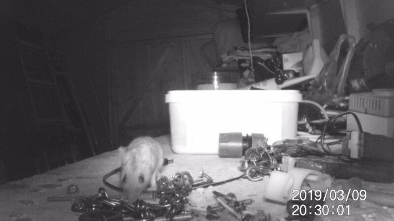 Пенсионер гадал, кто убирается по ночам в сарае, пока не установил камеру наблюдения животные